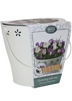Crocus Growing Gift Set