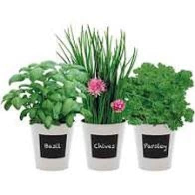 Herb Trio Gift Set