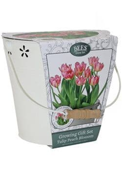 Tulip Growing Gift Set